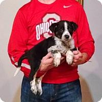 Adopt A Pet :: Mason - New Philadelphia, OH