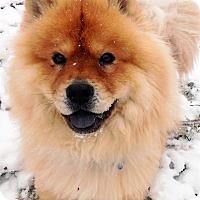 Adopt A Pet :: Cinder - Fennville, MI