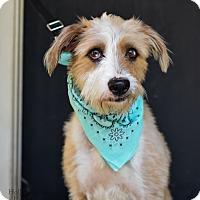 Adopt A Pet :: Adele - Baton Rouge, LA