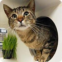 Adopt A Pet :: Tim - Topeka, KS