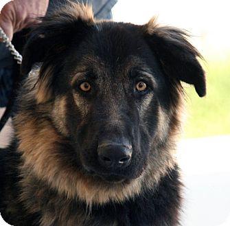 German Shepherd Dog Mix Dog for adoption in Palmdale, California - Frieda