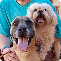 Adopt A Pet :: Zena - Las Vegas, NV