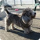 Adopt A Pet :: Smudge