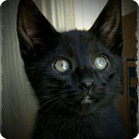 Adopt A Pet :: Mylene - Pueblo West, CO
