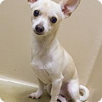 Adopt A Pet :: Andy - Seattle, WA