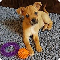 Adopt A Pet :: Wilcrest - Houston, TX