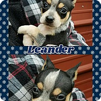 Adopt A Pet :: Leander - Ringwood, NJ