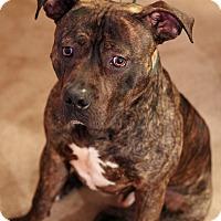 Adopt A Pet :: Moses - Mount Laurel, NJ
