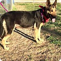 Adopt A Pet :: Galiena - Comanche, TX