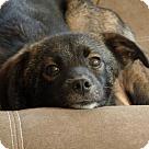 Adopt A Pet :: Becky