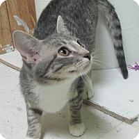 Adopt A Pet :: Mary Kay - Reeds Spring, MO