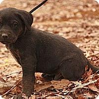 Adopt A Pet :: Tang (SG) - Brattleboro, VT