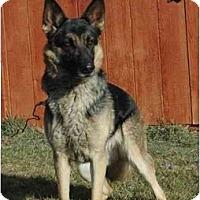 Adopt A Pet :: Cleo - Hamilton, MT