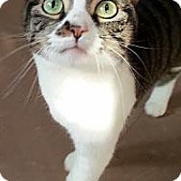 Adopt A Pet :: Precious - Alexandria, VA
