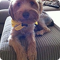 Adopt A Pet :: Romeo - Clearwater, FL