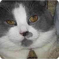 Adopt A Pet :: Falaffel - Cleveland, OH