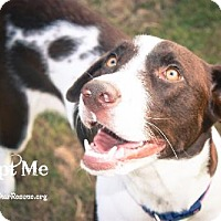 Adopt A Pet :: Patches - Frisco, TX