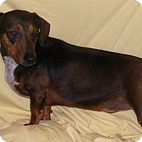 Adopt A Pet :: Charlie - Floresville, TX