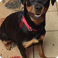 Adopt A Pet :: Mattie - Frederick, PA