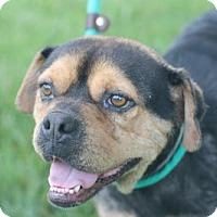 Adopt A Pet :: Bonnie - Matthews, NC