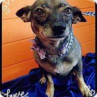 Adopt A Pet :: Maggie - Pipe Creek, TX