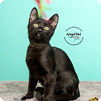 Adopt A Pet :: Baloo - Cincinnati, OH