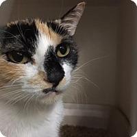 Adopt A Pet :: Kellyanne - Fort Collins, CO