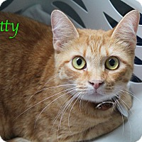 Adopt A Pet :: Kitty - Bradenton, FL
