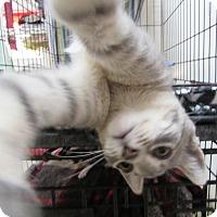 Adopt A Pet :: HAILEIGH - Jackson, MO