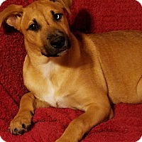 Adopt A Pet :: Pippin - New Oxford, PA