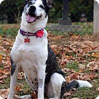 Adopt A Pet :: Georgia ADOPTION PENDING! - Potomac, MD