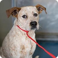 Adopt A Pet :: Percy - Fresno CA, CA