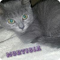 Adopt A Pet :: Morticia - Cincinnati, OH