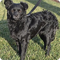 Adopt A Pet :: Bella Marie - Palo Alto, CA