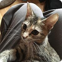 Adopt A Pet :: Cali - Charlotte, NC