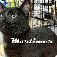 Adopt A Pet :: Mortimer - Houston, TX