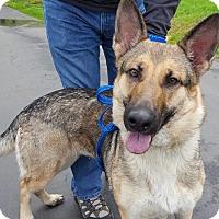 Adopt A Pet :: Joan! - Sacramento, CA