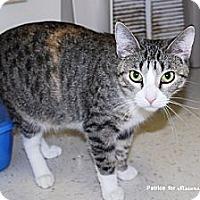 Adopt A Pet :: Rosetta - Lincoln, NE