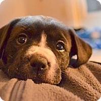 Adopt A Pet :: Sun - Foster, RI