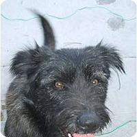 Adopt A Pet :: Kloey - Alliance, NE