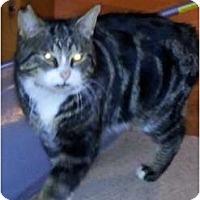 Adopt A Pet :: Jasper - Sterling Hgts, MI