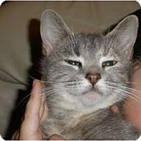 Adopt A Pet :: Lulu - Simpsonville, SC