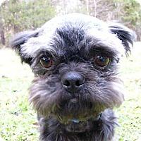 Adopt A Pet :: Kuro - Mocksville, NC