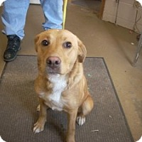 Adopt A Pet :: # 4 STRAY Avail. 12/3 - Carrollton, OH