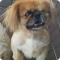 Adopt A Pet :: floyd - Scottsdale, AZ