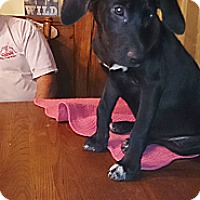 Adopt A Pet :: Louey - Charlestown, RI