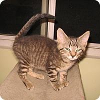 Adopt A Pet :: Mason - Colmar, PA