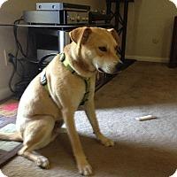 Adopt A Pet :: Blaze - West Hartford, CT