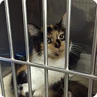 Adopt A Pet :: Christine - Byron Center, MI