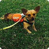 Adopt A Pet :: Arlene - Jupiter, FL